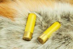 Cartucce sulla pelliccia di volpe rossa fotografia stock libera da diritti