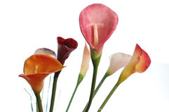 cartucho kwiaty Fotografia Royalty Free