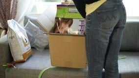 Cartulina unboxing de la mujer que contiene la comida y la arena para gatos caninas reales almacen de metraje de vídeo