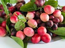 Carunda, fruite de Karonda Image stock