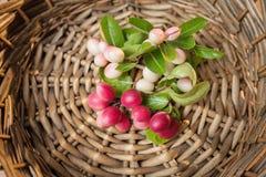 Carunda, fruite de Karonda en bandeja de la rota Fotos de archivo libres de regalías
