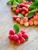 Carunda, Karonda, carandas της Carissa, Apocynaceae, κόκκινο καρύδι σπόρου φρούτων Στοκ εικόνες με δικαίωμα ελεύθερης χρήσης