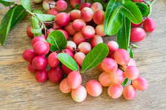 Carunda, Karonda, carandas της Carissa, Apocynaceae, κόκκινο καρύδι σπόρου φρούτων Στοκ φωτογραφία με δικαίωμα ελεύθερης χρήσης