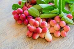 Carunda, Karonda, carandas της Carissa, Apocynaceae, κόκκινο καρύδι σπόρου φρούτων Στοκ φωτογραφίες με δικαίωμα ελεύθερης χρήσης