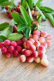 Carunda, Karonda, carandas της Carissa, Apocynaceae, κόκκινο καρύδι σπόρου φρούτων Στοκ Εικόνες