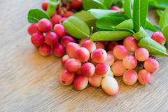 Carunda,Karonda,Carissa carandas,Apocynaceae, fruit red seed nut Royalty Free Stock Photos