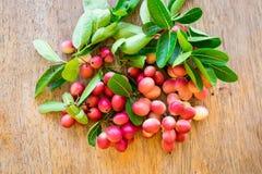 Carunda,Karonda,Carissa carandas,Apocynaceae, fruit red seed nut Stock Photos