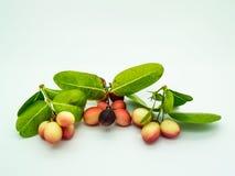 Carunda ou Karonda, ce fruit peut traiter le cancer photo libre de droits