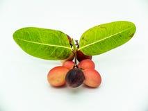 Carunda ou Karonda, ce fruit peut traiter le cancer photographie stock libre de droits