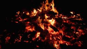 Carvão vegetal da fogueira vídeos de arquivo