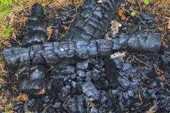 Carvão vegetal de um fogo extinto no close-up da floresta imagens de stock royalty free