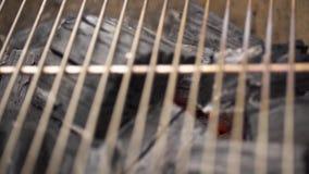 Carvão vegetal quente de incandescência na grade Pit With Flames do BBQ, close-up Os carvões ardentes fecham-se acima filme