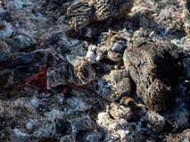 Carvões ardendo sem chama do fogo no fundo da grade foto de stock royalty free