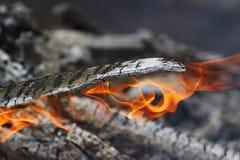 Carvões ardentes com uma cinza branca e umas chamas vermelhas foto de stock royalty free