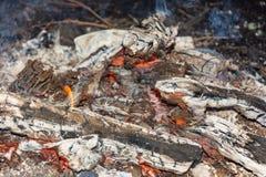 Carvões ardentes vermelhos fotografia de stock