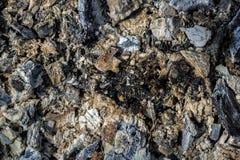 Carvões em um incêndio extinto Fundo natural foto de stock royalty free