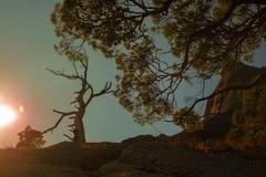 Carvalho de Califórnia no por do sol da montanha fotos de stock royalty free