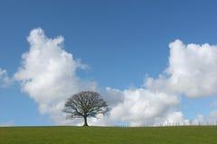 Carvalho solitário do inverno Fotografia de Stock