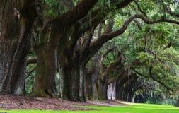 Carvalhos de Boone Hall Plantation em South Carolina imagem de stock royalty free