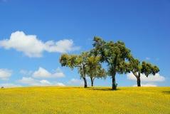 Carvalhos do prado e de cortiça Foto de Stock Royalty Free