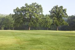 Carvalhos e grama maduros em um parque em uma manhã enevoada do verão Fotos de Stock