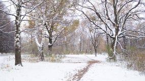 Carvalhos velhos Primeira neve fotografia de stock royalty free