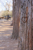 Carve heart on the tree. A heart carved on a tree in winter woods Stock Photography