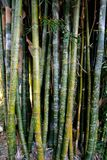 Carved bamboo in the Royal Botanical Gardens Stock Photography