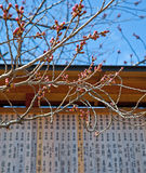 Carved Bamboo Wall of Prayers with budding Sakura in Kyoto Stock Images
