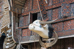 Carved buffalo head decoration on Tongkonan traditional house Stock Photos