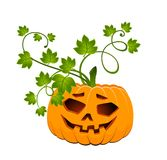 Carved face of pumpkin Royalty Free Stock Image