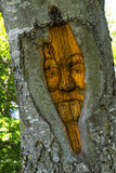 Carved face in a tree trunk Stock Image