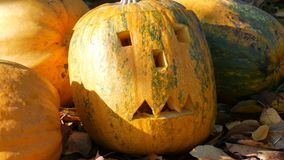 Carved halloween pumpkins stand outside as decor. Preparing for autumn holiday. Carved halloween pumpkins stand outside as decor. Preparing for the autumn stock video footage