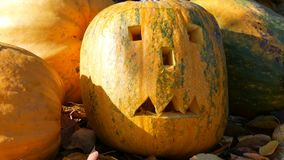 Carved halloween pumpkins stand outside as decor. Preparing for autumn holiday. Carved halloween pumpkins stand outside as decor. Preparing for the autumn stock footage