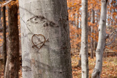 Carved Heart on Tree Royalty Free Stock Photography