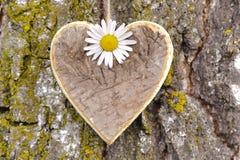 Carved heart at tree bark Royalty Free Stock Photo