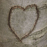 Carved Heart on Tree Bark Stock Images