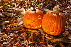 Carved Jack O Lanterns Stock Image