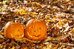 Carved Jack O Lanterns Royalty Free Stock Image