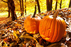 Carved Jack O Lanterns Stock Images