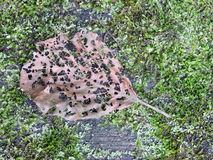 Carved leaf worm Stock Images