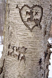 Carved Love Tree Royalty Free Stock Image