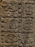 Carved Mayan stones, Quirigua ruins, Guatemala Stock Images