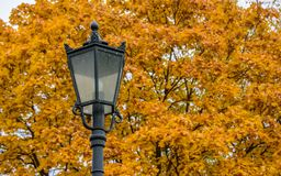 Carved metal street light on the background of autumn golden maple trees in Kolomenskoye park at warm autumn day, Moscow city royalty free stock photography