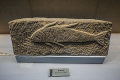 Carved stone with fish figure Stock Images
