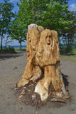 Carved tree part. Stock Photos
