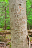 Carved Tree Trunk. Tree trunk carvings Stock Photos