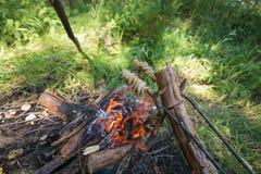 Carvery lunch i den gröna skogen Royaltyfri Fotografi