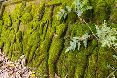 Carving stone with mosses. Stock Image