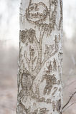 Carvings auf Baumstamm Lizenzfreies Stockbild